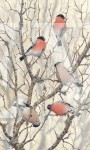 Bullfinches by Stephen Message