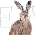 Mr Hare by Claire Milligan