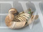 Miniature Garganey by Philip Nelson