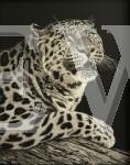Amur Leopard by Katy Rewston