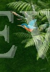 Ferns & Kingfisher by Martin Rumary