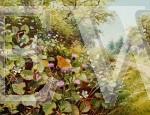 Forest Butterflies by Richard Tratt
