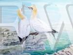 Gooey Gannets by Tina Bone