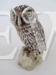 Little Owl by Neil Dalrymple